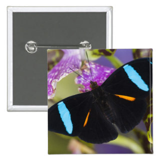 Sammamish, Washington Tropical Butterfly 15 Cm Square Badge