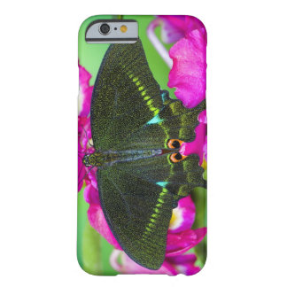 Sammamish, Washington Tropical Butterfly Barely There iPhone 6 Case