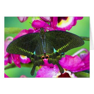 Sammamish, Washington Tropical Butterfly Card