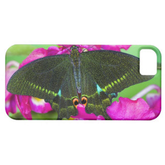 Sammamish, Washington Tropical Butterfly Case For The iPhone 5