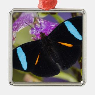 Sammamish, Washington Tropical Butterfly Christmas Ornament
