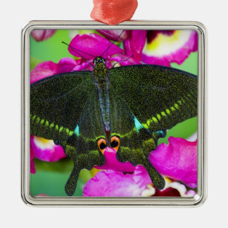 Sammamish, Washington Tropical Butterfly Christmas Ornament