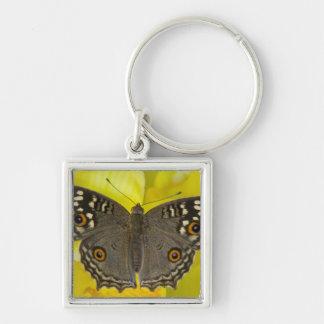 Sammamish Washington Tropical Butterfly Key Ring