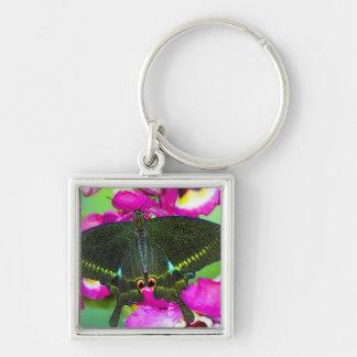 Sammamish, Washington Tropical Butterfly Key Ring