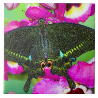 Sammamish, Washington Tropical Butterfly Large Square Tile