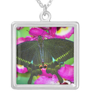 Sammamish, Washington Tropical Butterfly Necklaces