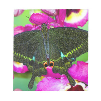 Sammamish, Washington Tropical Butterfly Notepad
