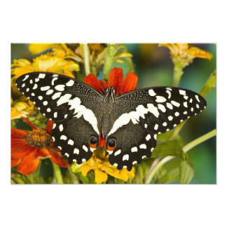 Sammamish, Washington Tropical Butterfly Photographic Print