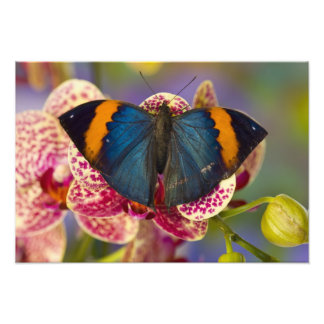 Sammamish Washington Tropical Butterfly Photographic Print