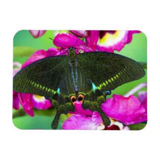 Sammamish, Washington Tropical Butterfly Rectangular Photo Magnet