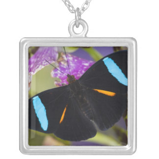 Sammamish, Washington Tropical Butterfly Silver Plated Necklace