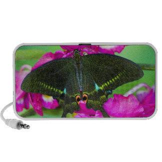 Sammamish, Washington Tropical Butterfly Mini Speakers
