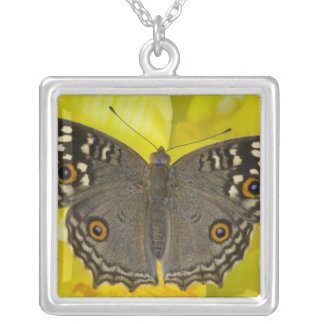 Sammamish Washington Tropical Butterfly Square Pendant Necklace