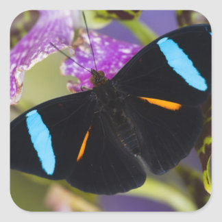 Sammamish, Washington Tropical Butterfly Square Sticker