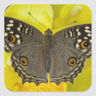 Sammamish Washington Tropical Butterfly Square Sticker