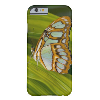 Sammamish, Washington, USA Barely There iPhone 6 Case