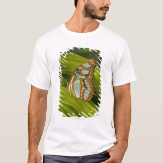 Sammamish, Washington, USA T-Shirt
