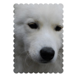 "samoyed-14.jpg 5"" x 7"" invitation card"