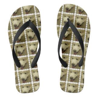 samoyed-5 flip flops
