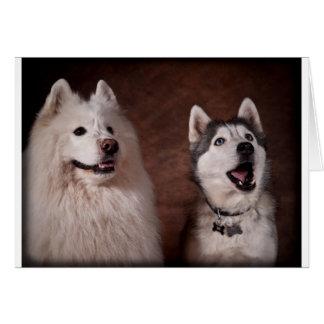 Samoyed and Husky Card