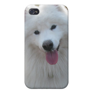 Samoyed dog beautiful photo iphone 4 case