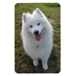 Samoyed dog beautiful photo portrait magnet
