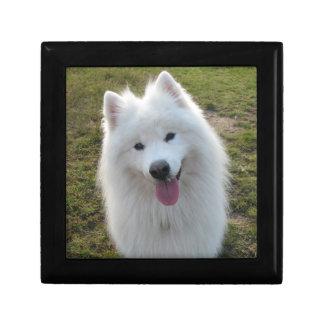 Samoyed dog beautiful photo trinket jewelry box