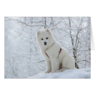 Samoyed dog card