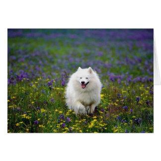 Samoyed Dog Greeting Card