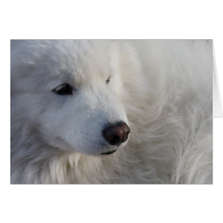 Samoyed Dog Greeting Card