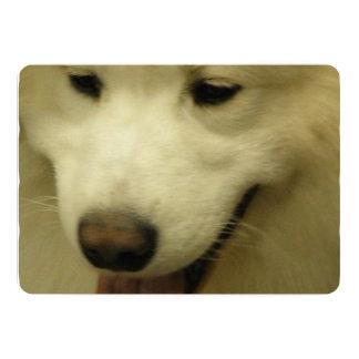 "Samoyed Dog 5"" X 7"" Invitation Card"