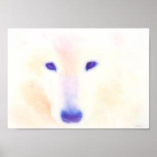 Samoyed dog poster