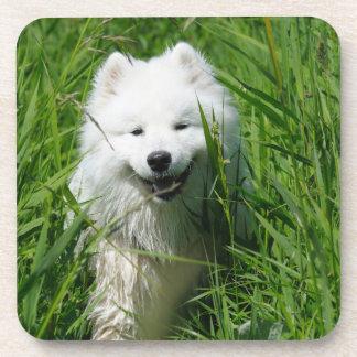 Samoyed In Grass Coaster Set