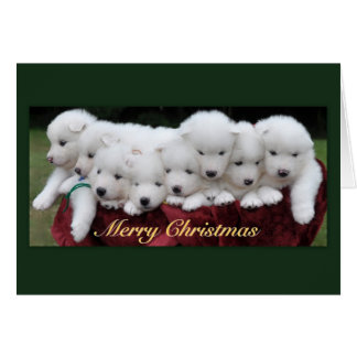Samoyed Puppies (4 weeks old) Christmas Greeting Cards