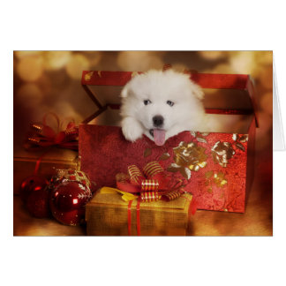 Samoyed Puppy In A Christmas Box Card