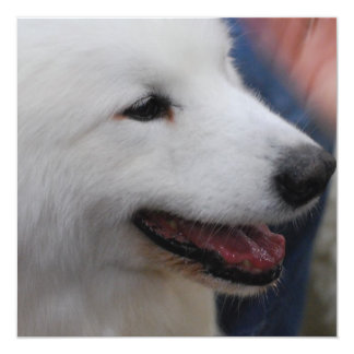 Samoyed Puppy Personalized Announcements