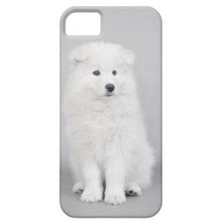 Samoyed puppy iPhone 5 cover