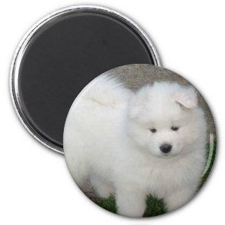 Samoyed puppy refrigerator magnet