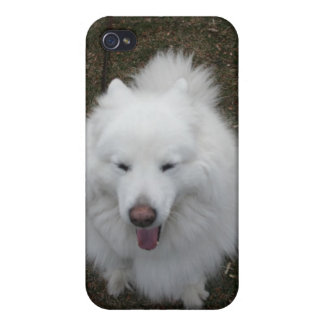 Samoyeds LOL Cover For iPhone 4
