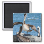 San Diego California Pelicans Fridge Magnets