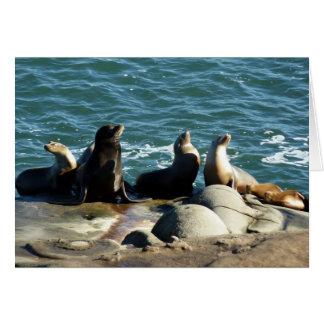 San Diego Sea Lions Card