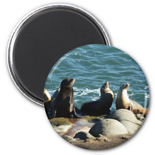 San Diego Sea Lions Magnet