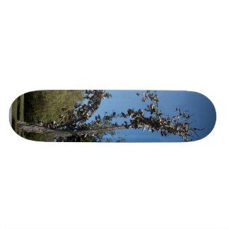 San Diego Shoe Tree In Morley Field 21.6 Cm Skateboard Deck