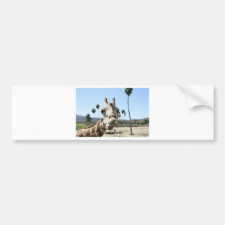 San Diego zoo Bumper Sticker