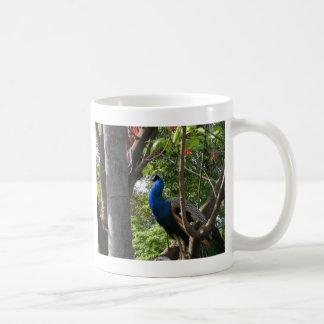 San Diego Zoo Peacock Basic White Mug