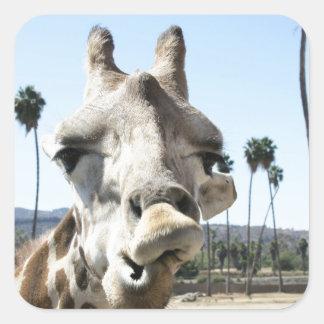 San Diego zoo Square Sticker