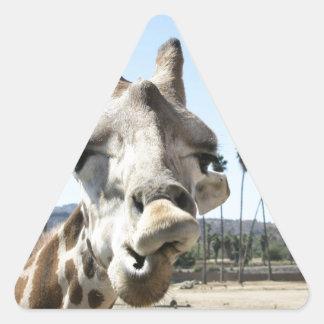 San Diego zoo Triangle Sticker