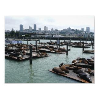 San Francisco and Pier 39 Sea Lions City Skyline Photo Art