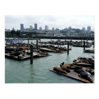 San Francisco and Pier 39 Sea Lions City Skyline Postcard