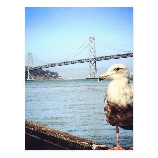 San Francisco Bay Bridge Seagull Postcard